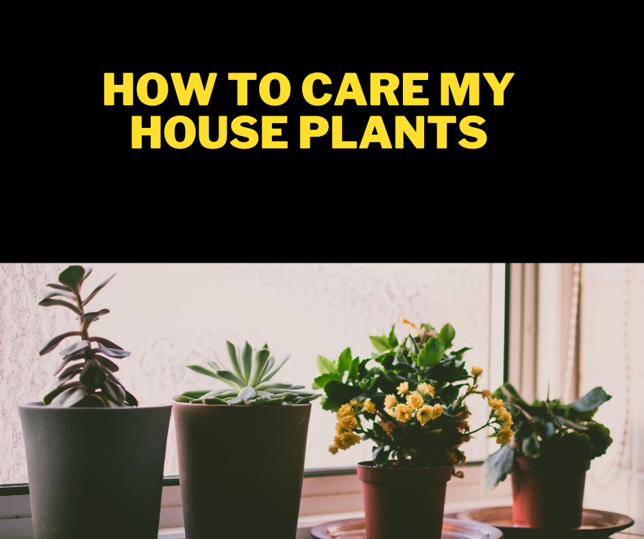 House plants, air purifying plants