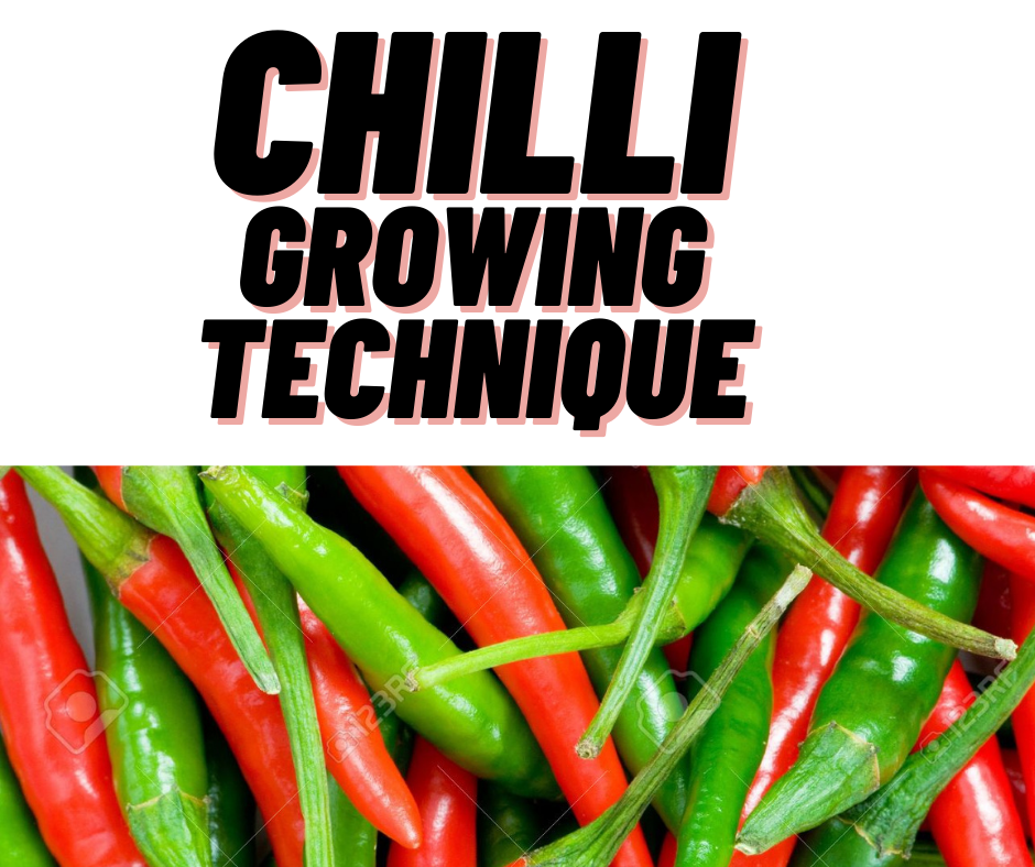 chilly growing season