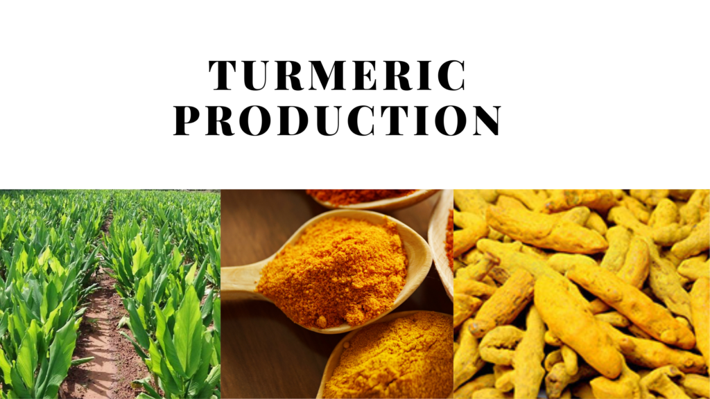 Turmeric production area in pakistan