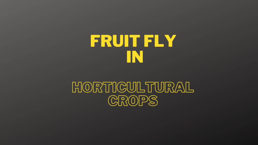 fruit fly symptoms