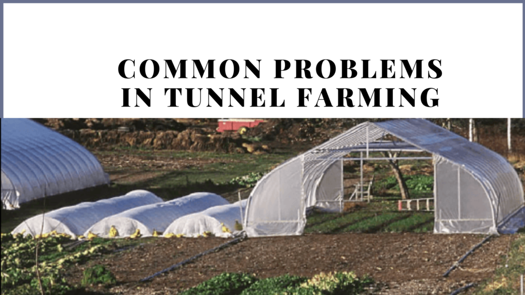 benefits of tunnel farming